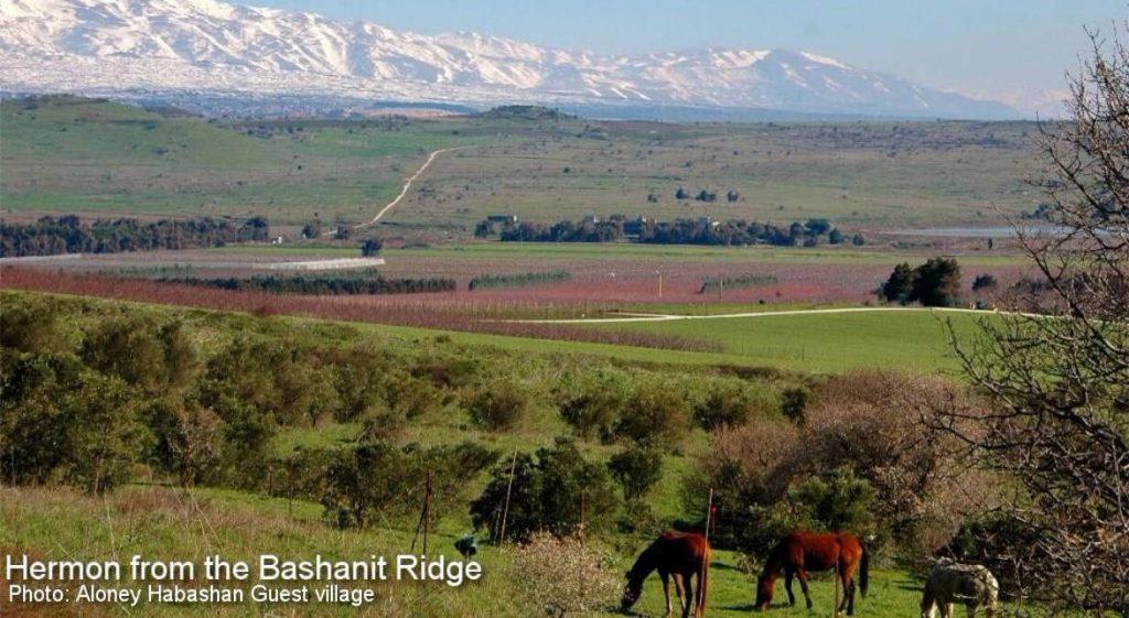 Hermon from the Bashanit Ridge
