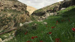 Spring Flowers Blooming in Wadi Qelt