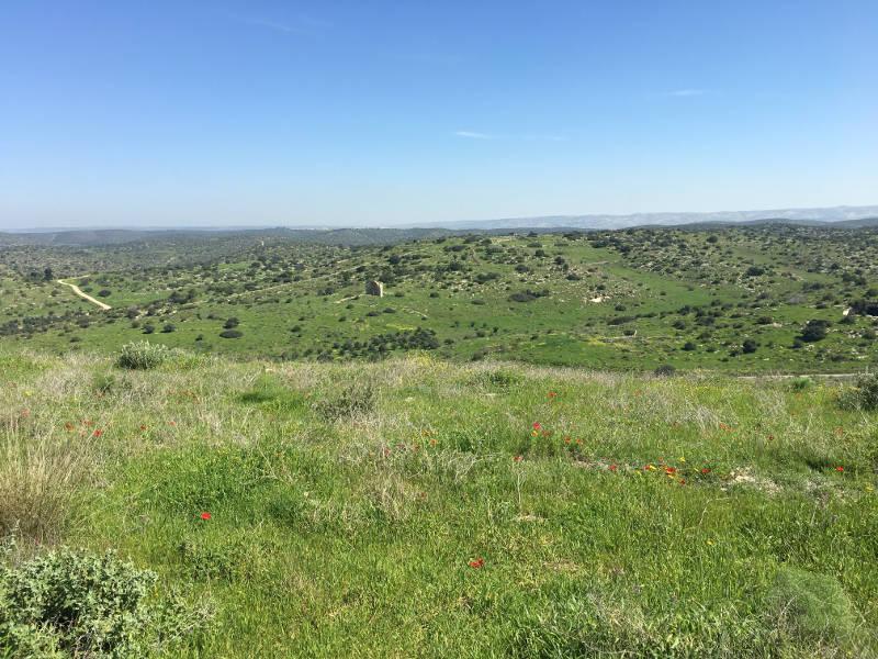 Judean plains