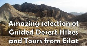 GUIDED DESERT HIKES AND TOURS