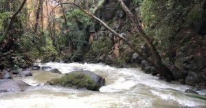 Banias Stream Hike